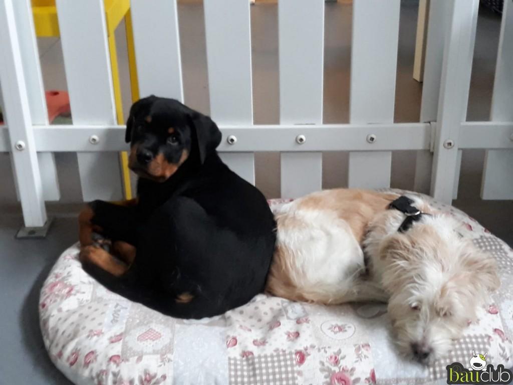 Athos e Lucia