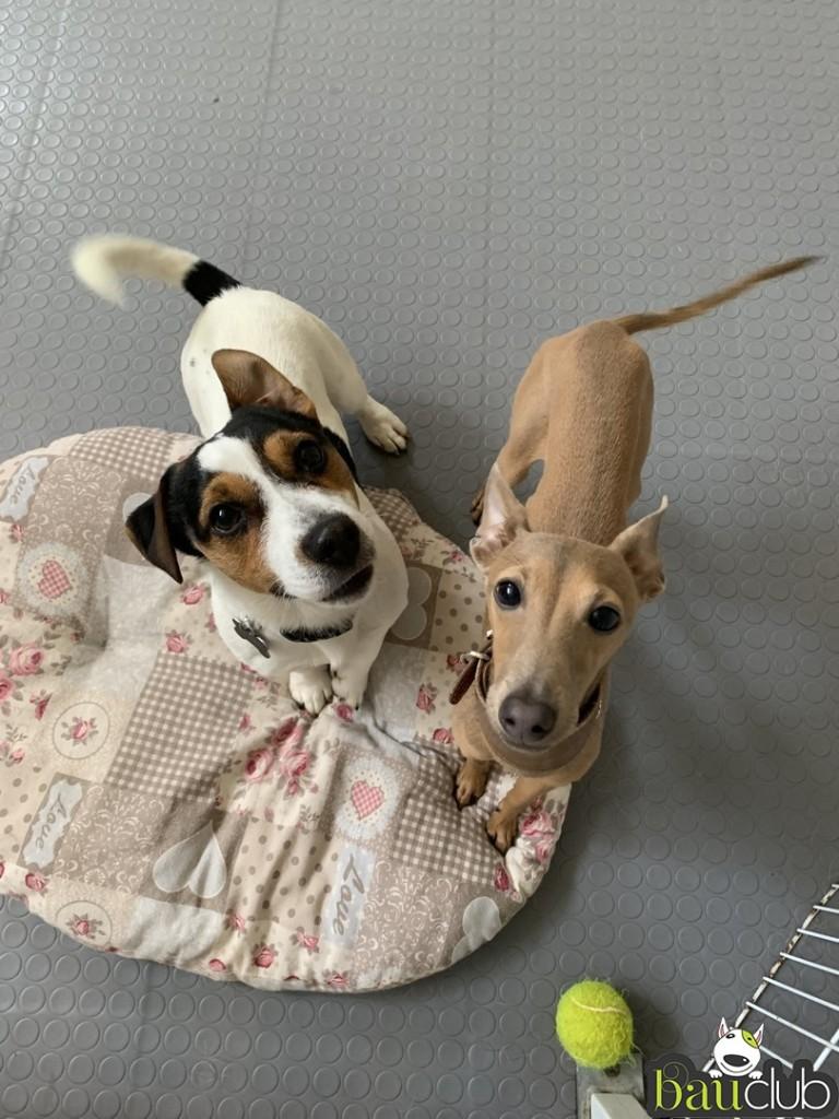 Romeo e Argo