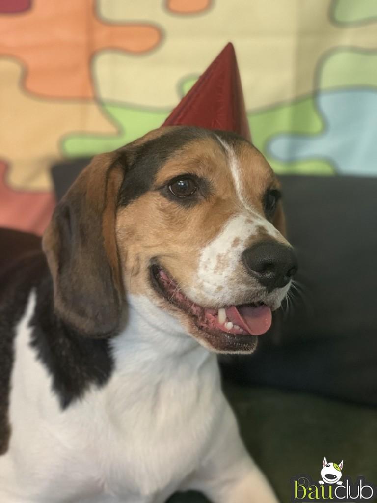Buon compleanno Max