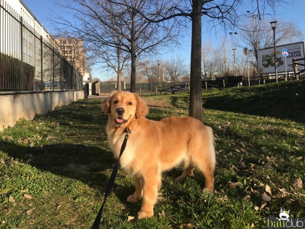 Heidi in passeggiata