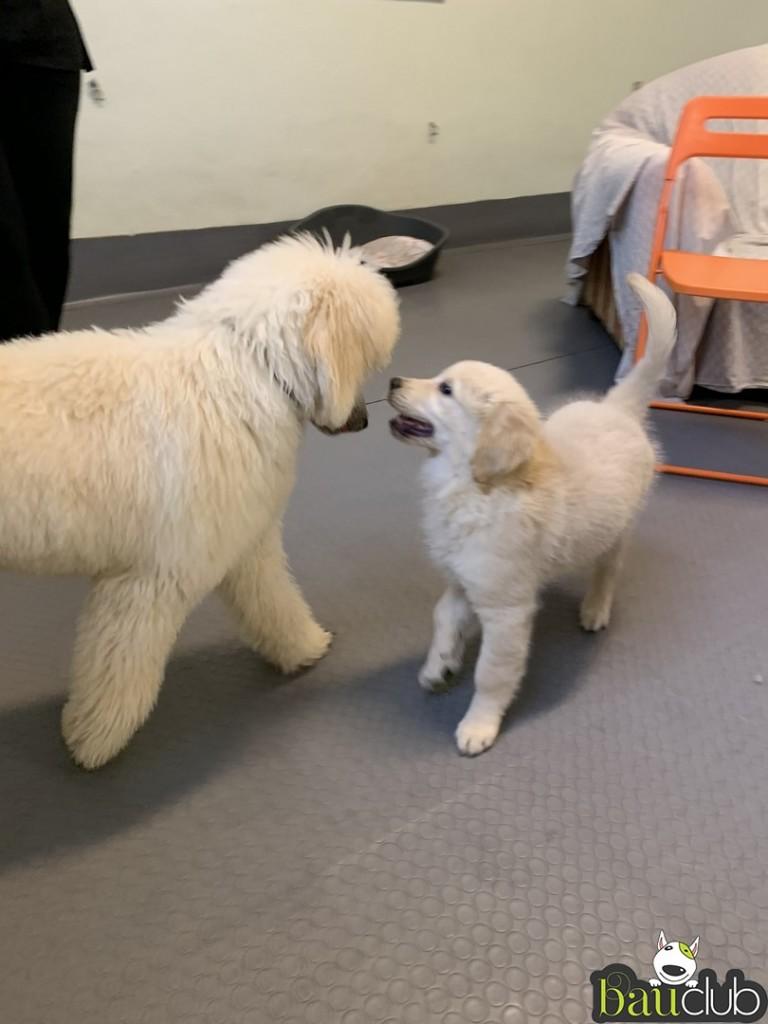Incontri tra cuccioli