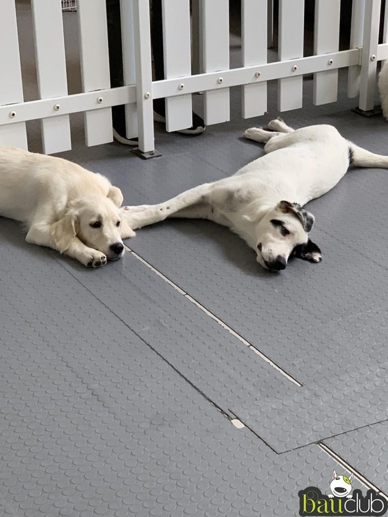 Riposo delle cucciole