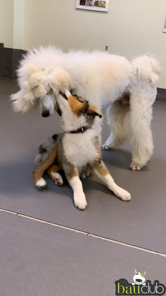 Sirio e Walker, super cuccioli