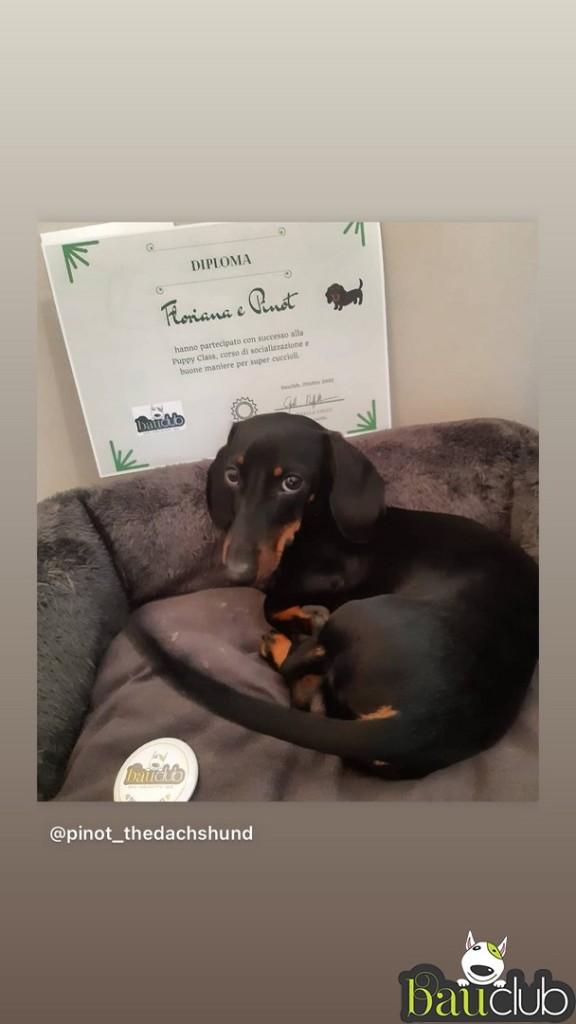 Puppy class superata con successo!