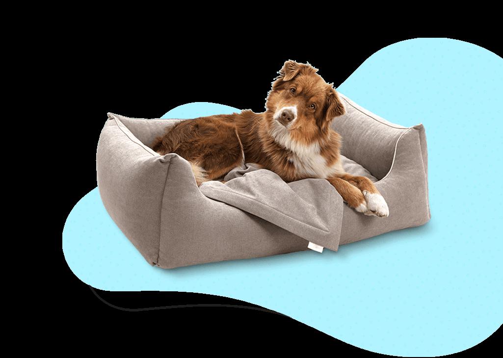 contatti-informazioni-telefono-bauclub-asilo cani a milano